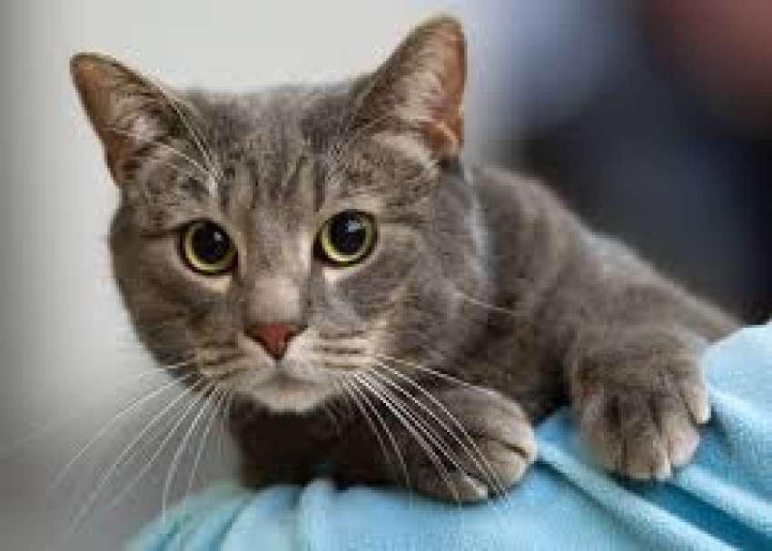 Η γάτα έχει θεραπευτικές ιδιότητες λένε οι επιστήμονες - iSelida.gr