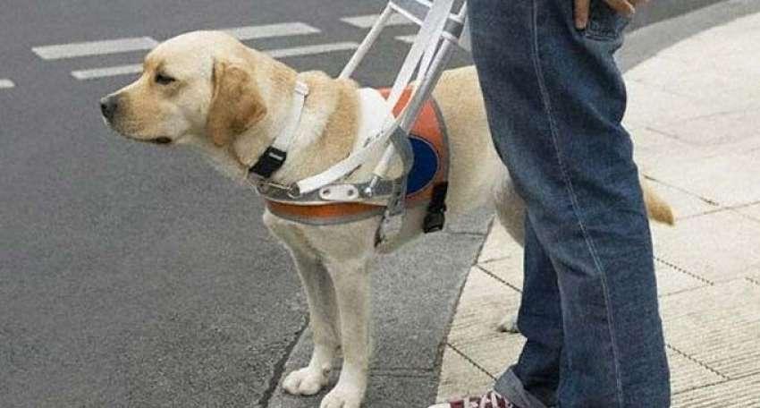 Φύλακες &#039;&#039;άγγελοι&#039;&#039; <br> των τυφλών οι <br> συνοδοί σκύλοι