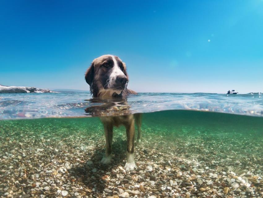 Επιτρέπεται να <br> έχουμε το σκυλί μας <br> στην παραλία;