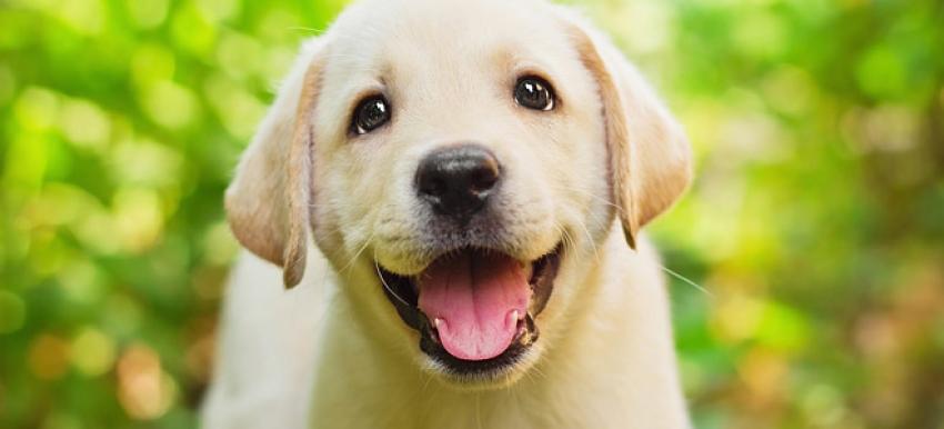 Μπορεί ένας <br> μεγαλόσωμος σκύλος <br> να ζει σε διαμέρισμα;