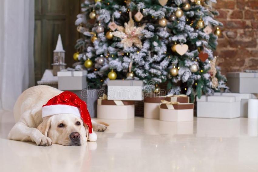 Το σκυλί μας <br> στο σπίτι και το <br> Χριστουγεννιάτικο δέντρο