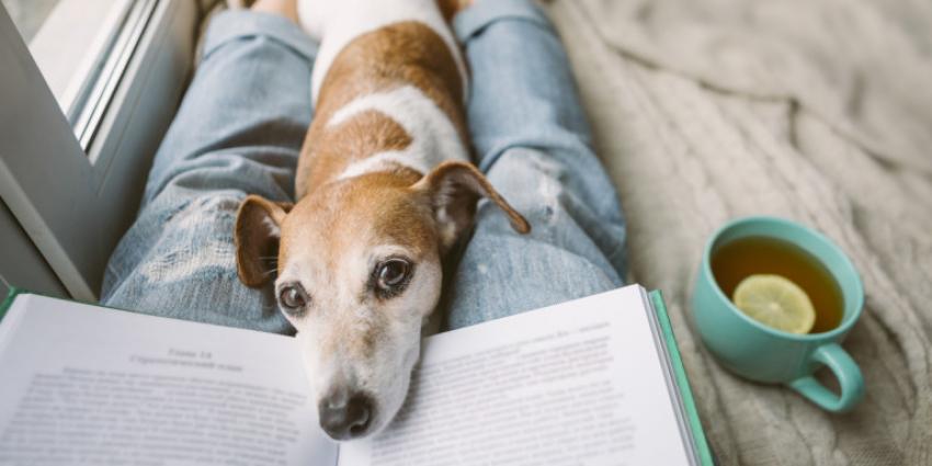 Ποιά είναι τελικά <br> η ''ανθρώπινη'' ηλικία <br> του σκύλου