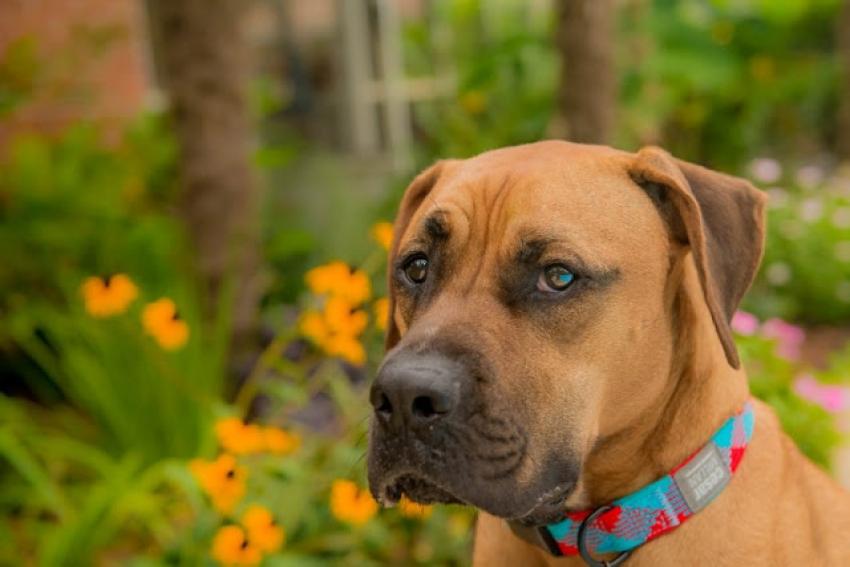 Τα 5 κόλπα για <br> να μη ''μαδάει'' <br> ο σκύλος μας