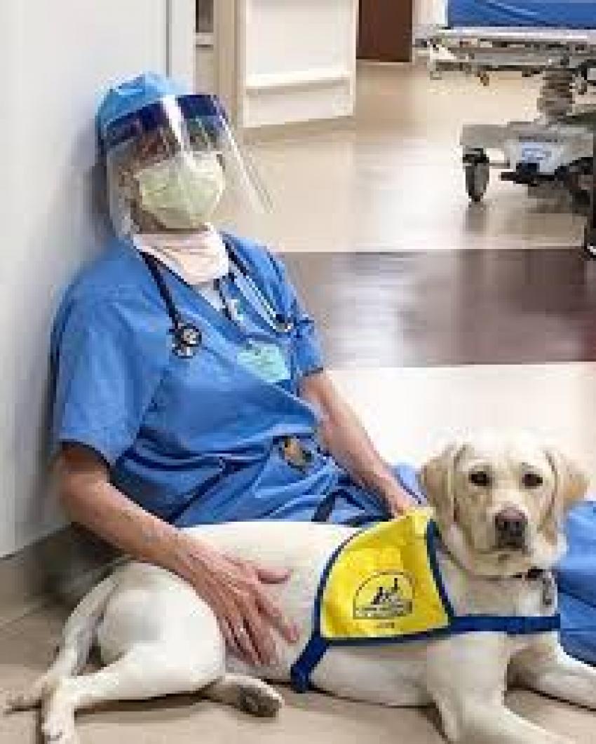 Η σκυλίτσα συντροφιάς <br> που χαλαρώνει τους <br> γιατρούς του κορωνοιού