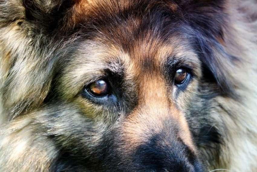 Όταν γεράσει <br> το σκυλάκι μας <br> τότε θέλει αγάπη