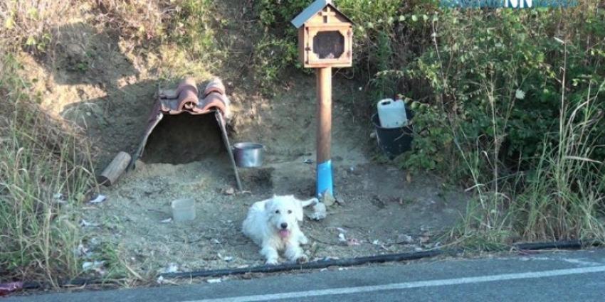 Σκυλάκι ζει δίπλα <br> στο εικόνισμα του <br> νεκρού αφεντικού του