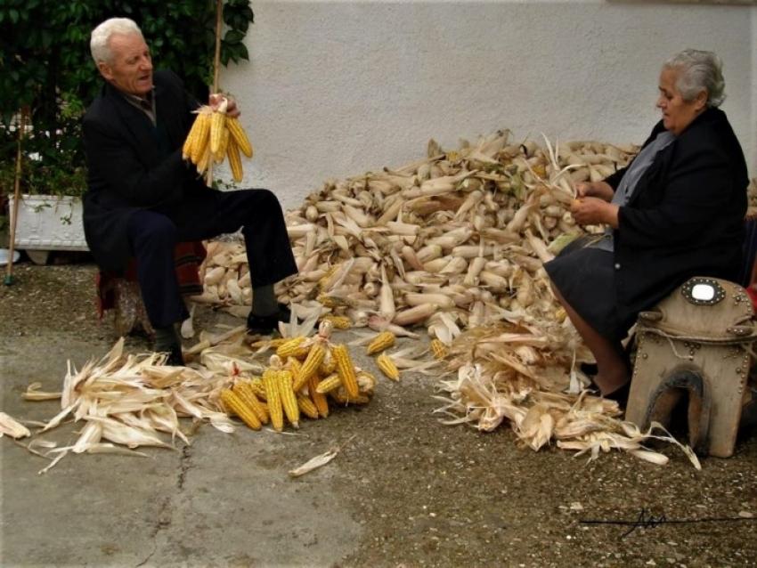 Ηλικιωμένοι καθαρίζουν <br> τα καλαμπόκια στο <br> χωριό (εικόνα)