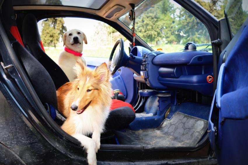 Ταξίδι στο αυτοκίνητο <br> μαζί με τον <br> σκύλο. Οδηγίες.