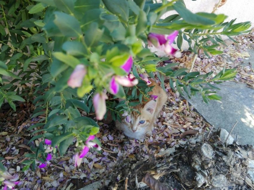 ''Κλέβει καρδιές'' <br> το γατάκι του Τόλη <br> Πικουλίδη (εικόνα)
