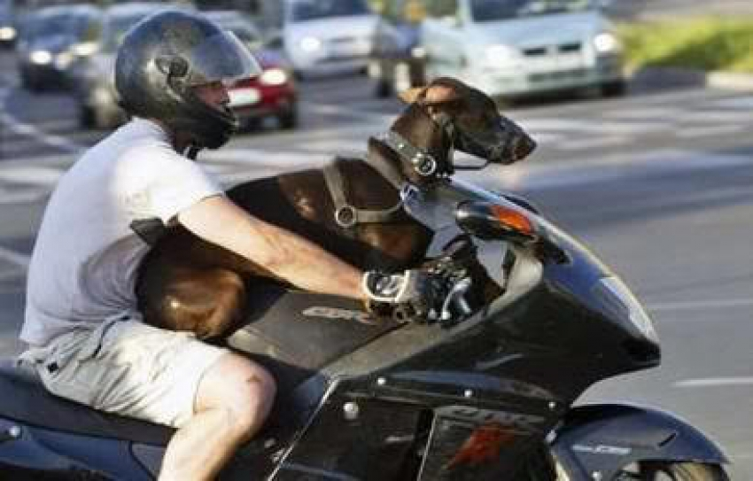 Οδήγηση μοτοσικλέτας <br> με συνεπιβάτη τον <br> σκύλο μας!
